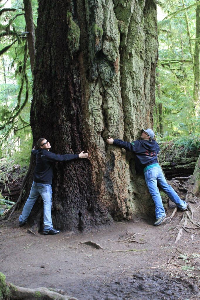Just one of the many trees you'll find in British Colombia.