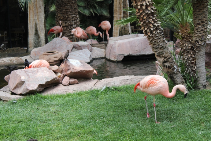 Exotic Habitat behind Flamingo Hotel.